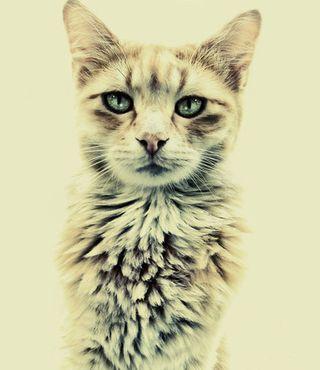 Friends,cat,cute,kitty,serious,animal-1f423b29adb65f1f3ce1b1883bfb46c6_h